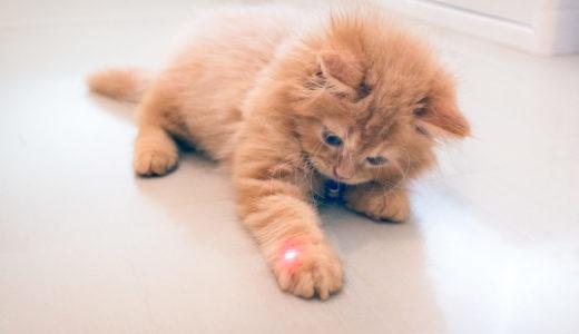 レーザーポインターで犬や猫などのペットと遊ぶ時の注意