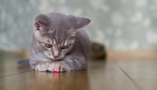一体どこまでの生き物がレーザーポインターと遊んでくれるのか?